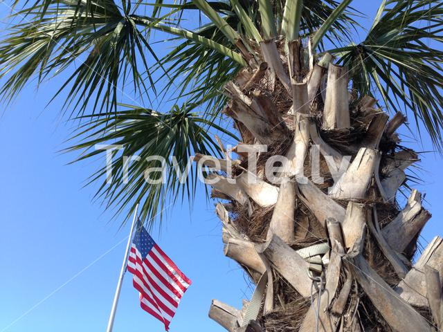 Palmtree and the flag of the United States of America