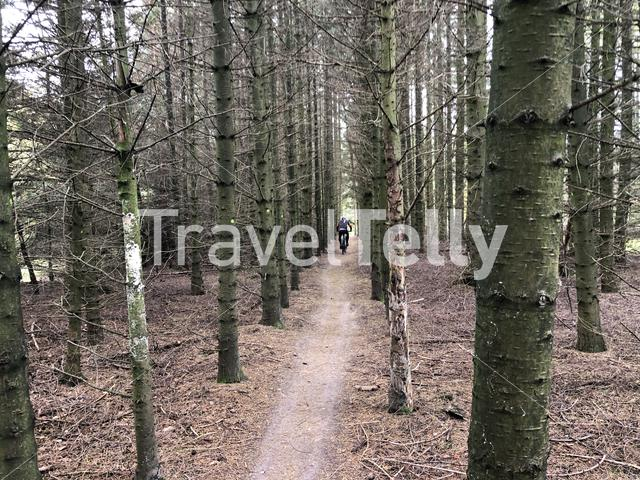 Cycling through the forest at Nationaal Park Drents-Friese Wold in Friesland, The Netherlands