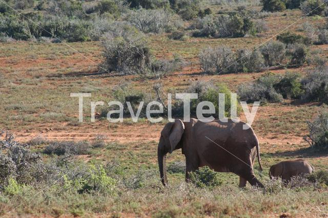 Mother and baby elephant in South Africa