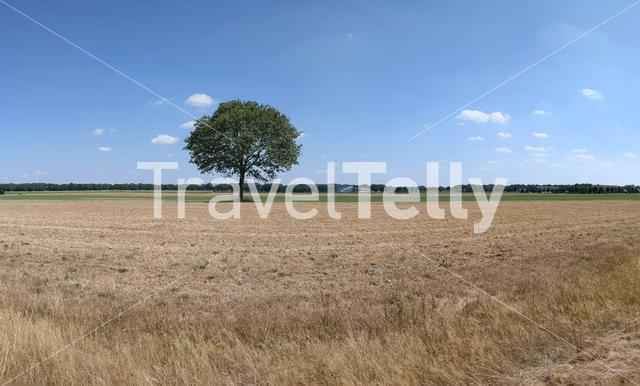 Lonely tree in Drenthe, The Netherlands