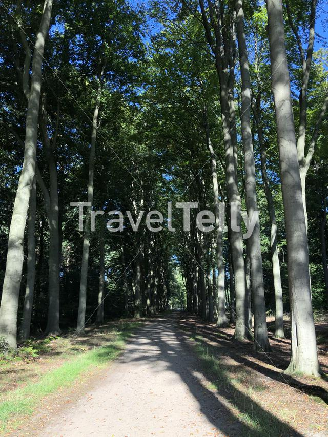 Forest around castle Slangenburg in Gelderland, The Netherlands