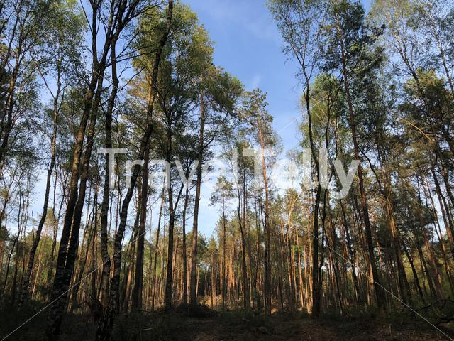 Forest at the Sallandse heuvelrug National park in Overijssel, The Netherlands