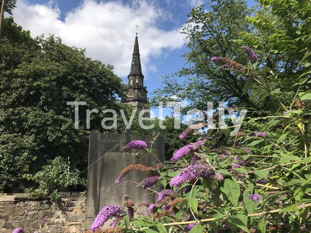 Butterfly bush with St Cuthbert's Church at the background in Edinburgh Scotland