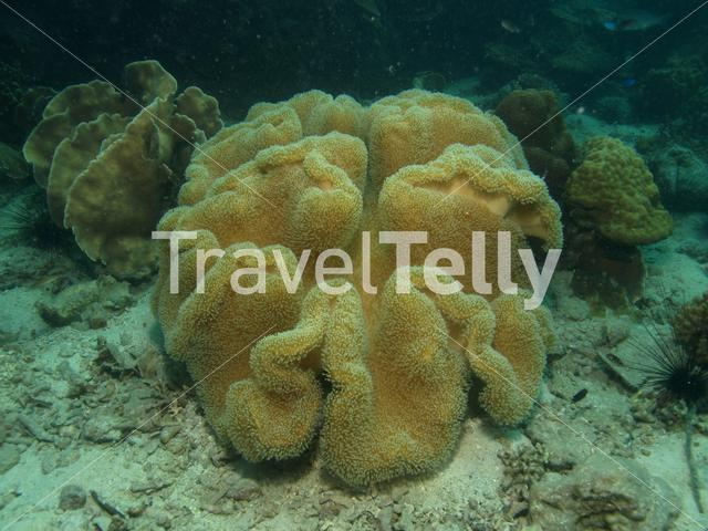 Sea anemone in Koh Chang Thailand