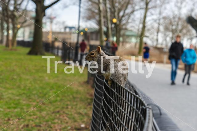 Squirrel on a fence in city hall park in New York City