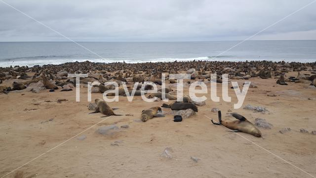 Seal colony at Cape Cross in Namibia