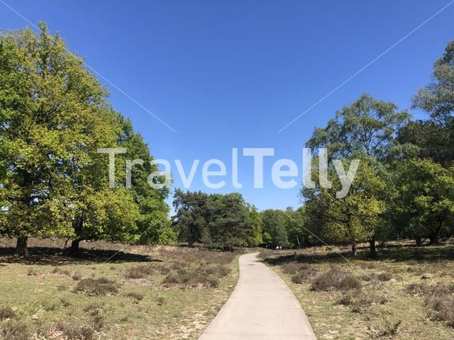 Path through National Park De Hoge Veluwe in Gelderland, The Netherlands