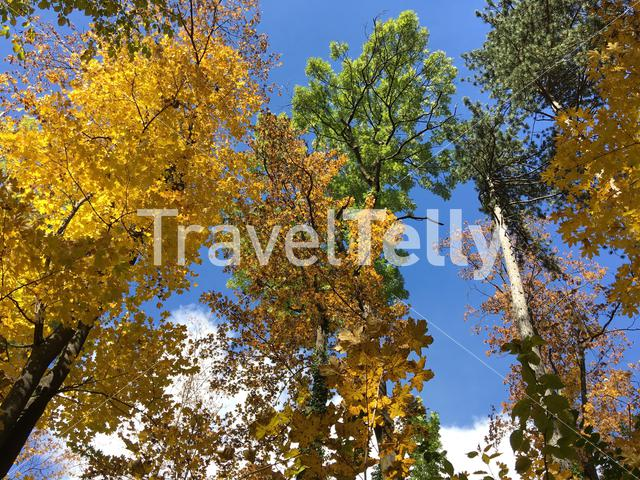 Forest with autumn colours in Brasov Romania