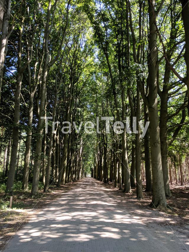 Road through a forest around Wilhelminaoord in Drenthe, The Netherlands