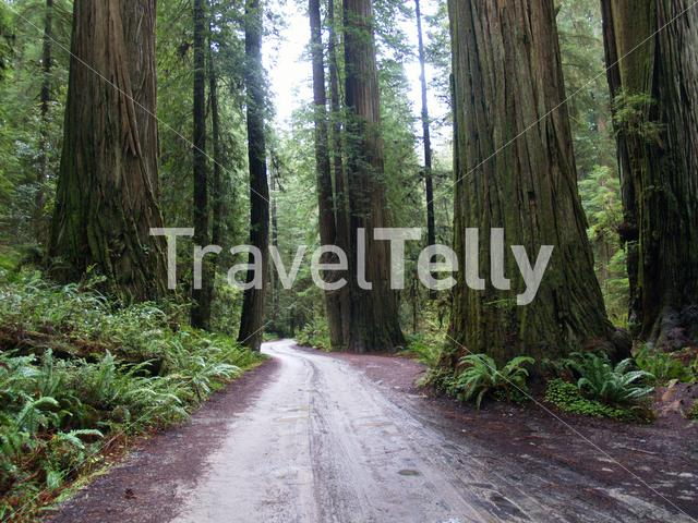 Road through Redwood National and State Parks