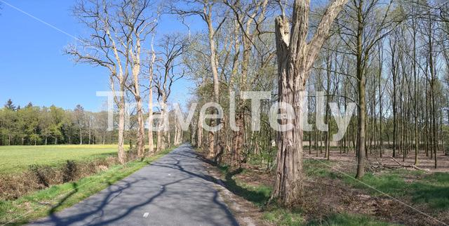 Panorama from an empty road through the forest in Gelderland, The Netherlands
