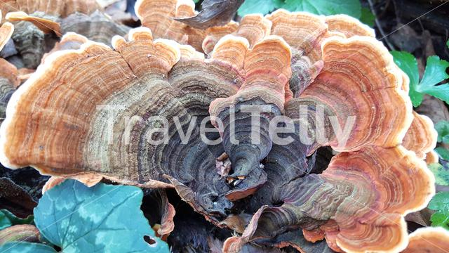 Fungus at a tree in the Vikos Gorge in the Pindus Mountains of northern Greece