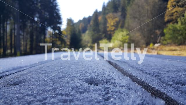 Frost on wood in the forest of Romania