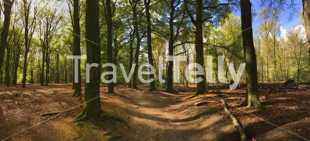 Panorama from the walk trail at the hoge veluwe in Ede The Netherlands