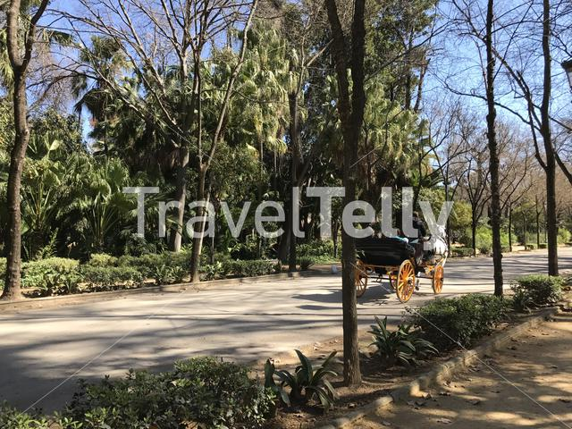 Horse and carriage in Maria Luisa Park in Seville Spain