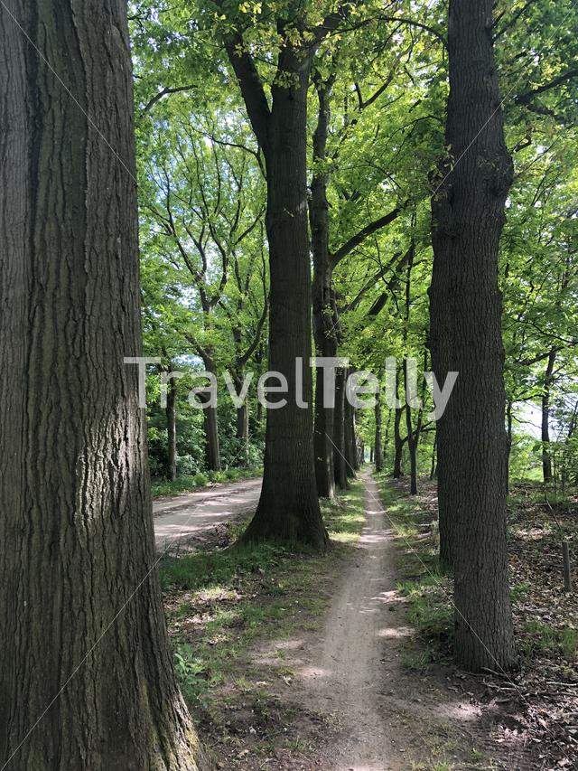 Cycle path through the forest around Gelselaar, The Netherlands