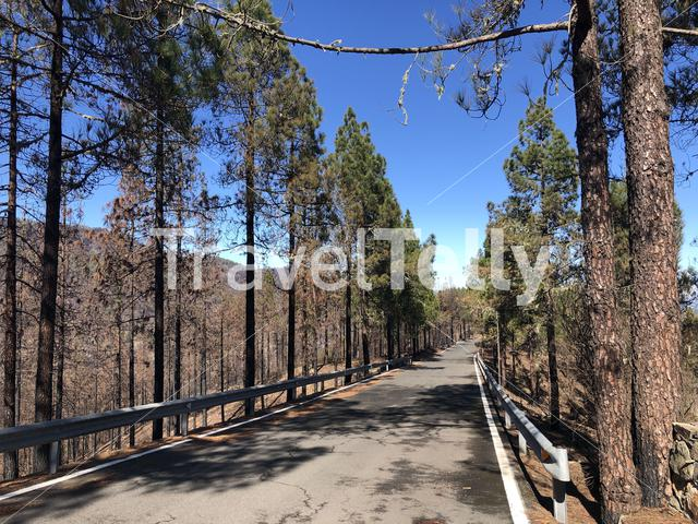 A road through the nature of Gran Canaria