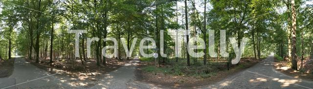 Panorama from roads through the forest around Wesepe, Overijssel The Netherlands