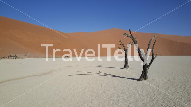 Deadvlei with skeletal centuries-old trees in Namibia