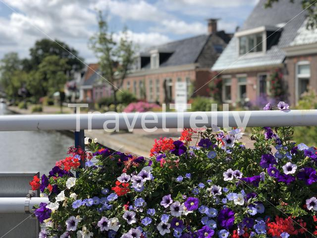 Flowers next to a canal in Warten, Friesland The Netherlands
