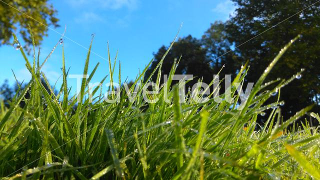 Water drops on grass in the morning in Emmeloord The Netherlands