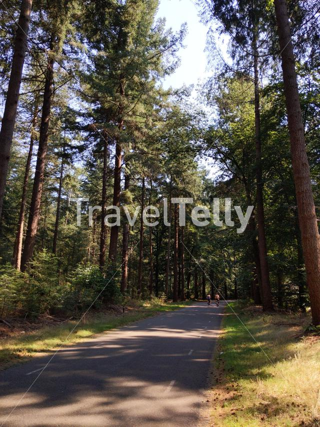 Cycling through the forest of the Lemelerberg in Overijssel, The Netherlands