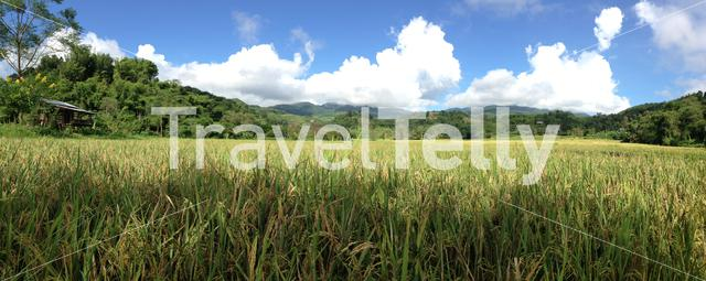 Rice field panorama in Northern Thailand