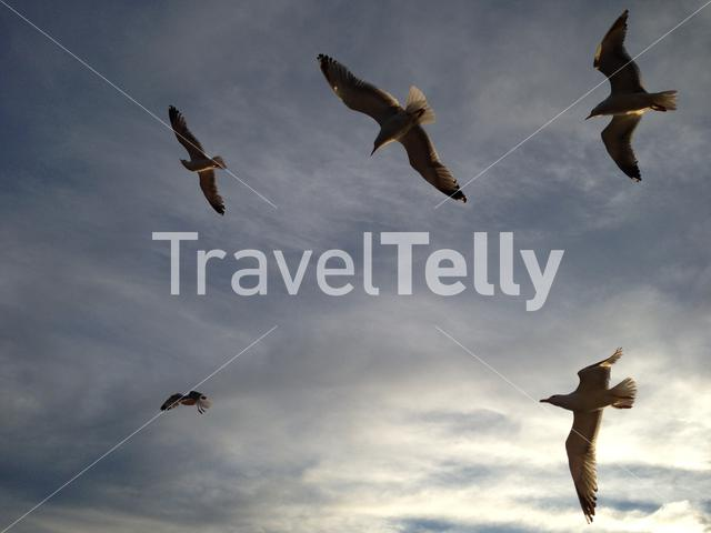 Gulls flying above the Aegean Sea in Greece