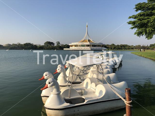 Swan Paddle Boats at the King Rama IX Park in Bangkok, Thailand