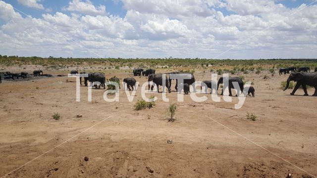 Herd of elephants passing by at Khaudum National Park in Namibia