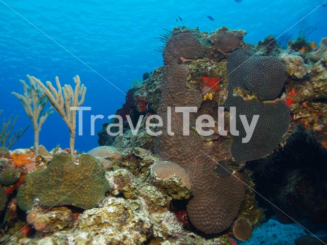 Hard and soft coral in the Mesoamerican Reef Mexico