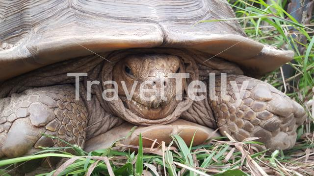 Close up from a tortoise in Togo
