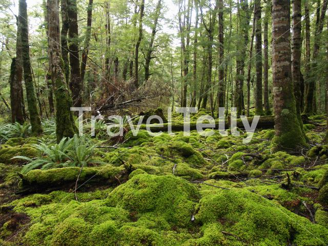 Green forest in New Zealand