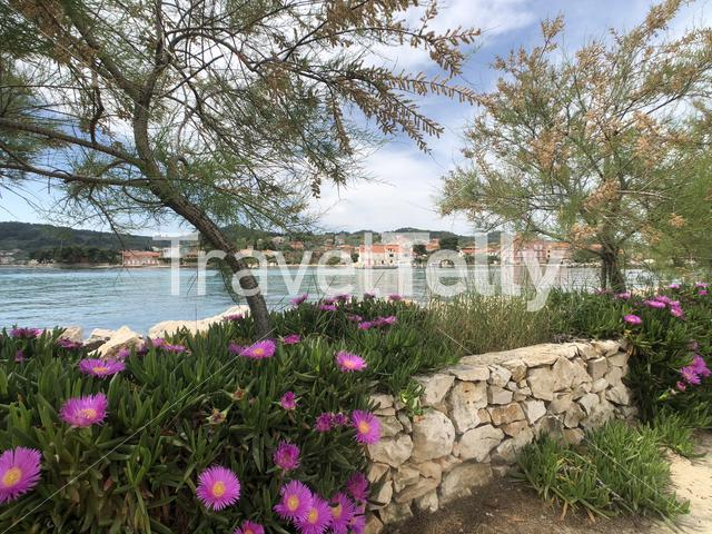 Trees and flowers along the coast of Poljana on the island of Ugljan in Croatia