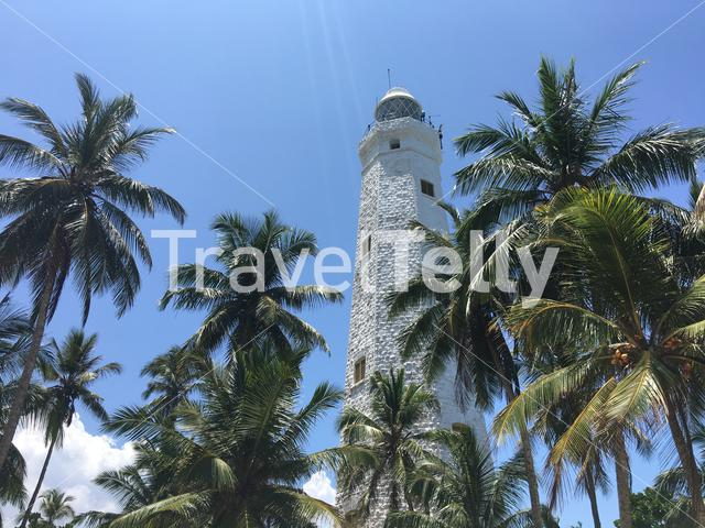 Dondra Head Lighthouse behind palmtrees near the southern most point in Sri Lanka