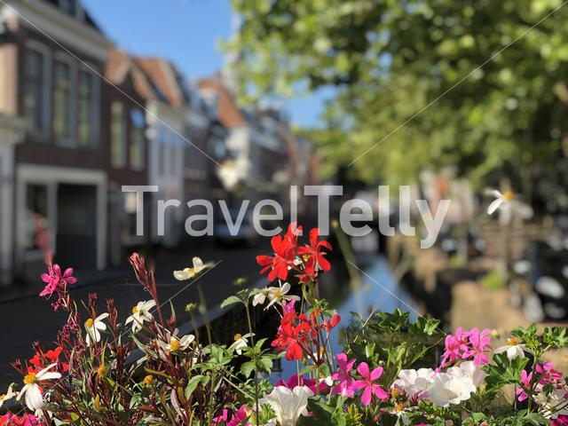 Flowers at a canal in Bolsward, Friesland The Netherlands
