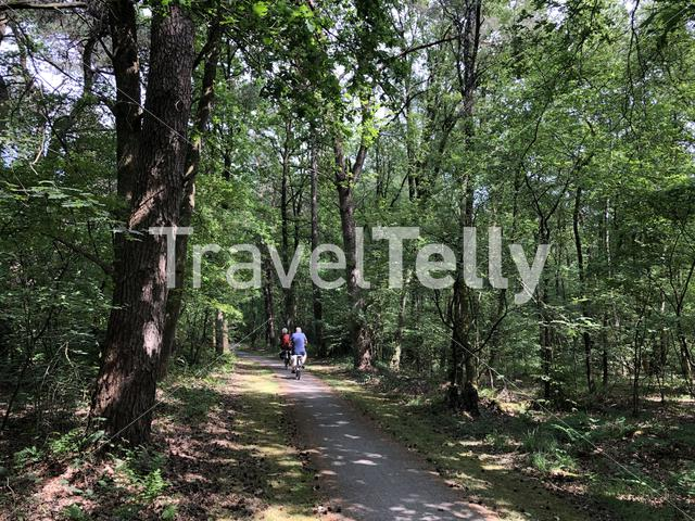 Tourist cycling through the forest around Ommen in Overijssel The Netherlands