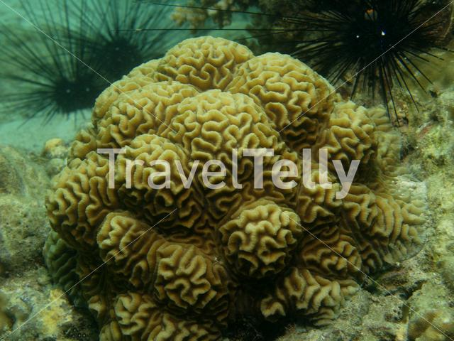 Stone coral in Ko Chang Thailand