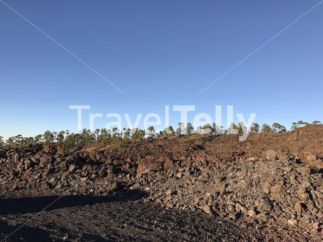 Tree landscape at Teide National Park in Tenerife the Canary Islands