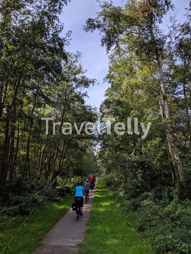 Tourists cycling through the forest around Kalenberg, Overijssel, The Netherlands