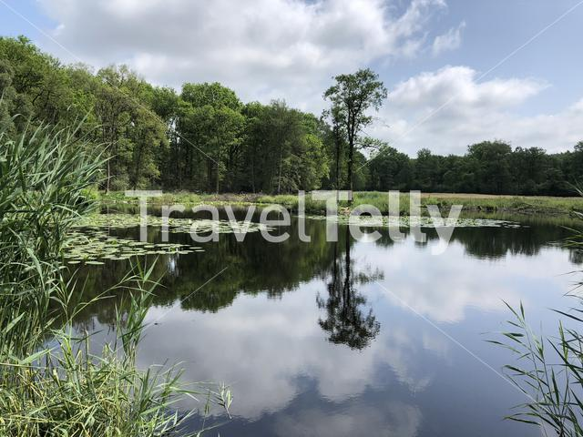 A Lake and forest in Natuurschoon Nietap in the province Drenthe, The Netherlands