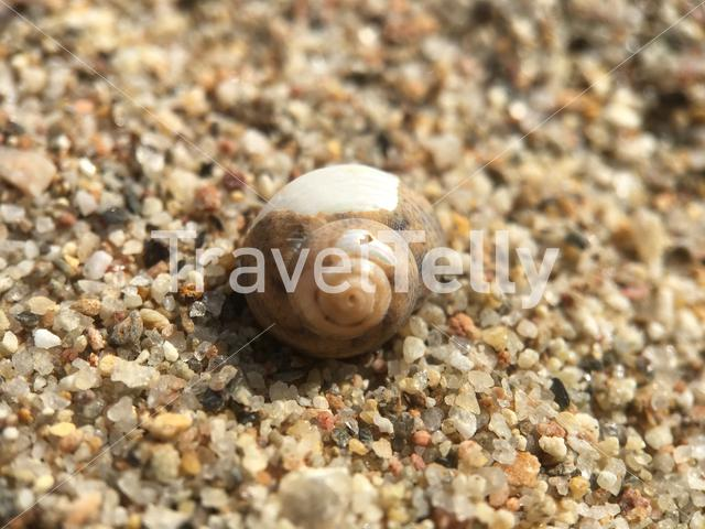 Empty snail house at the beach in Greece