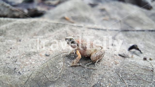 Frog in Fazao-Malfakassa National Park in Togo