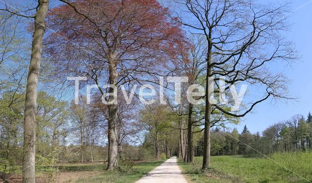Panorama from a path through the forest in Gelderland, The Netherlands