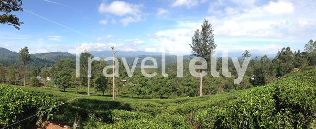 Tea plantation around Bandarawela Sri Lanka
