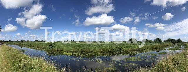 Canal with seeblatt in Friesland The Netherlands