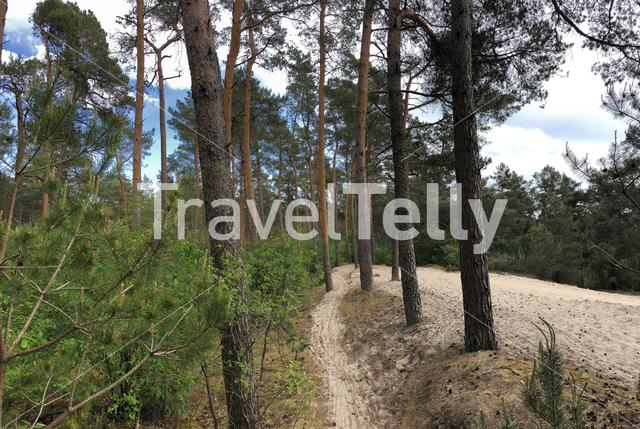 MTB route through the sand around Ommen in Overijssel The Netherlands