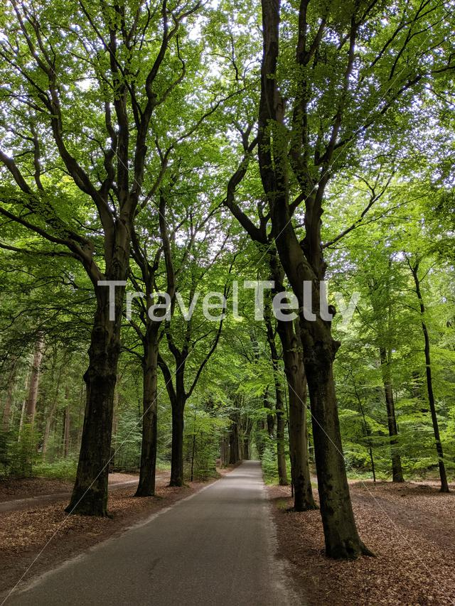Road through the forest around Oudemirdum in Friesland The Netherlands