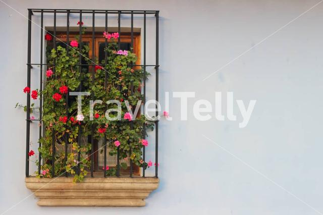 Window with flowers in Antigua Guatemala