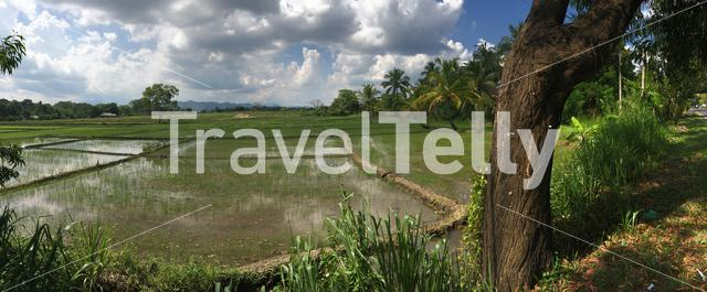 Panorama from paddy field landscape in Sri Lanka
